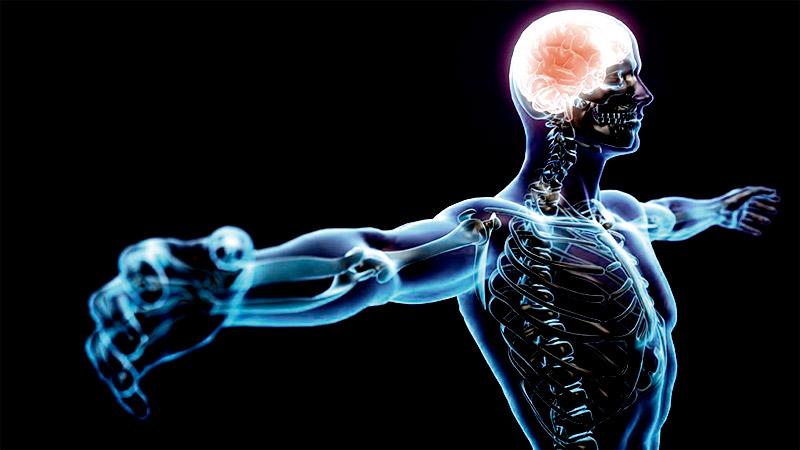 Нервная система и головной мозг